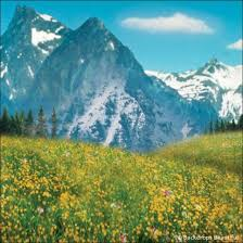mountain backdrop aspen mountains 6 backdrop backdrops beautiful