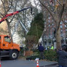 local christmas tree gets starring role at lincoln center wbfo