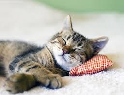 come si dorme bene qui dormire bene consigli posizioni rimedi naturali cure naturali it