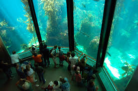 japanese aquarium top 10 largest and most astonishing aquariums in the world
