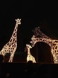 Phoenix Zoo Lights by Phoenix Zoolights Travelwithscott