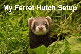 Ferret Hutches And Runs My Ferret Hutch Setup Youtube