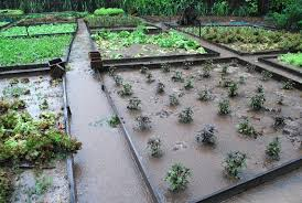 vegetable garden design permaculture the garden inspirations