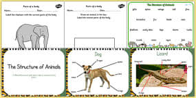 animals and their young matching activity sheets match