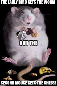 Mouse Memes - mouse memes imgflip