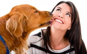 Why Do Dogs Lick The Sofa Why Do Dogs Lick Dogbuddy Blog