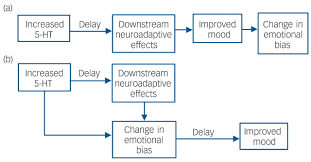 why do antidepressants take so long to work a cognitive download figure
