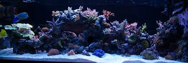 Reef Aquascape Designs The Pros And Cons Of A Peninsula Tank Reef Central Online Community