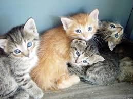 Cute Kittens Meme - cute kittens meme generator captionator caption frabz kitten images