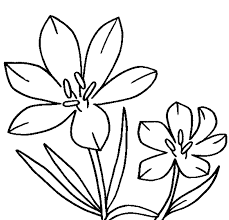 drawings of flowers for coloring flowers and leaves