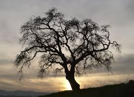 rsr the origin of trees kgov