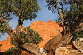 photography colorado springs camels 2 garden of the gods colorado springs mike