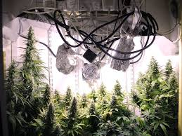 cfl grow light fixture cfl arrangement horizontal or vertical lighting uk420