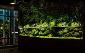 tenji builds amazon com a jaw dropping planted aquarium system