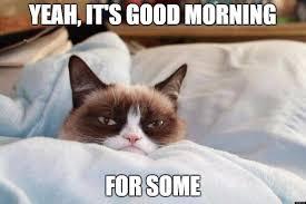 Morning People Meme - cat morning people