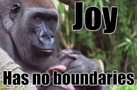 Joy Meme - joy imgflip