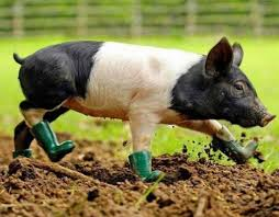 20 cute photos of animals wearing shoes page 5 of 5