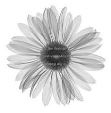 the 25 best white daisy tattoo ideas on pinterest simple flower