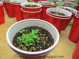desert organic farming indoor garden solo cup update start of week 2