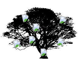 hd black tree vector graphics library free clip designs