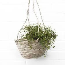 hanging planter basket hanging baskets meusshop com