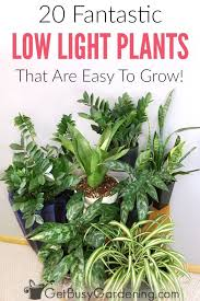 houseplants that need little light 20 low light indoor plants that are easy to grow low lights