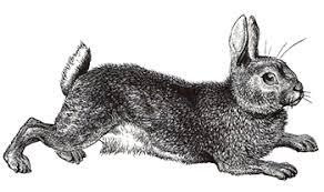 vintage rabbit rabbits by design decorator styled handmade rabbits in new