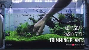 membuat aquascape bening aquascape rasio style trimming plants youtube