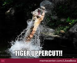 Uppercut Meme - tiger uppercut memes best collection of funny tiger uppercut pictures