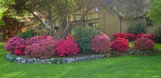 Trees Plants And Flowers - shade loving flowers to plant in your yard today u0027s homeowner