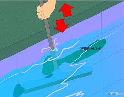 eliminate and prevent green algae in a swimming pool green algae