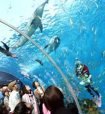 japanese aquarium at one japanese aquarium christmas comes early japan zimbio