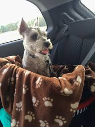 Window Seats For Dogs - cheap safe dog car seat 10 steps with pictures