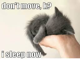 Grumpy Cat Sleep Meme - don t move sleep now grumpy cat meme on me me
