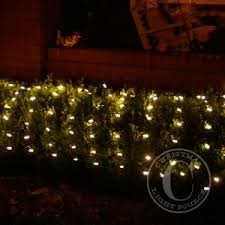 warm white led net lights on green wire