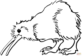 kiwi is looking for food coloring page free printable coloring pages