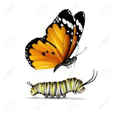 vector plain tiger or monarch butterfly and