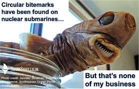 Shark Meme - shark meme monday 3 round up sharkstuff