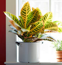 Tropical Foliage House Plants