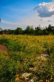 mckay nursery landscape project wildflower garden stepping
