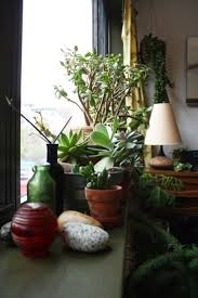 153 best urban green images on pinterest indoor plants