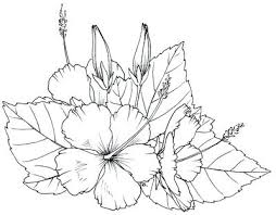 coloring pictures of hibiscus flowers hibiscus flower coloring page drawn color 5 free printable pages