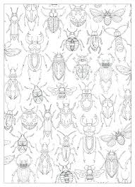 preschool coloring pages bugs insect coloring pages schneeski com