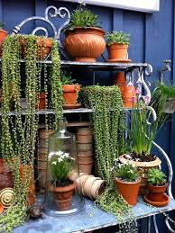 Hanging Plants For Patio 52 Best Patio Shelves Images On Pinterest Plants Garden And