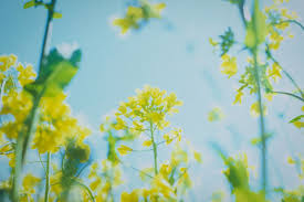 images of plants plants may form memories using mad cow disease proteins new