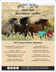 mustang adoptions burro adoption bureau of land management