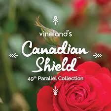 canada flowers blooms flower of the year 2017 canadian shield canada blooms