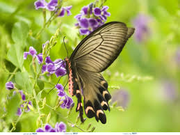 butterfly flower photos trees and flowers pictures images of on