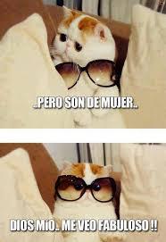 Gato Meme - est禳pido y sensual gato meme by yaiza albarrac祗n memedroid