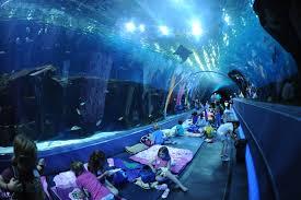 Home Aquarium by Fish Tank 37 Impressive Largest Aquarium In The Us Pictures Design